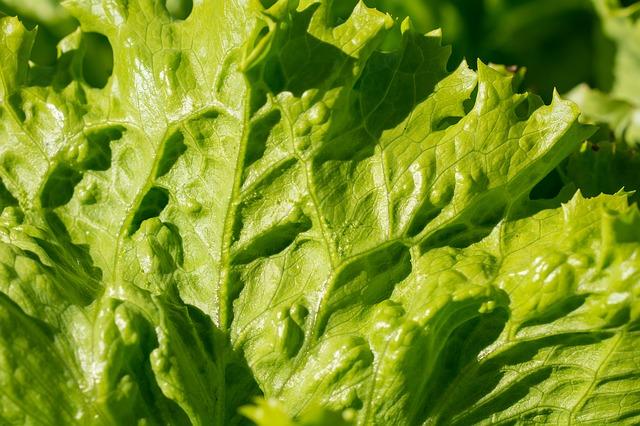 salad-1710350_640.jpg